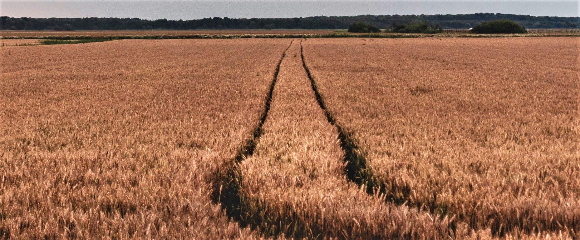 Seguro ou Crédito Rural? Entenda a diferença