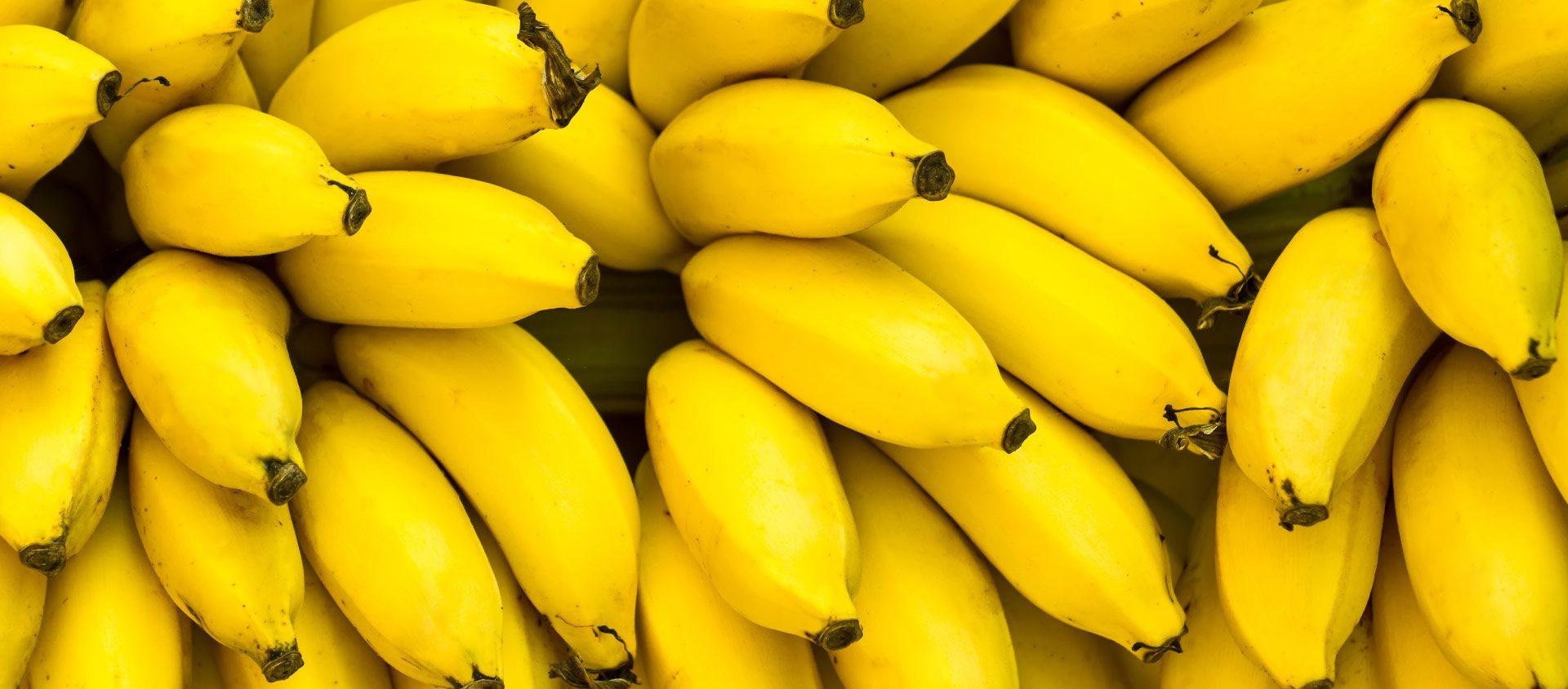 Da flor ao fruto: saiba aproveitar todos os benefícios da banana