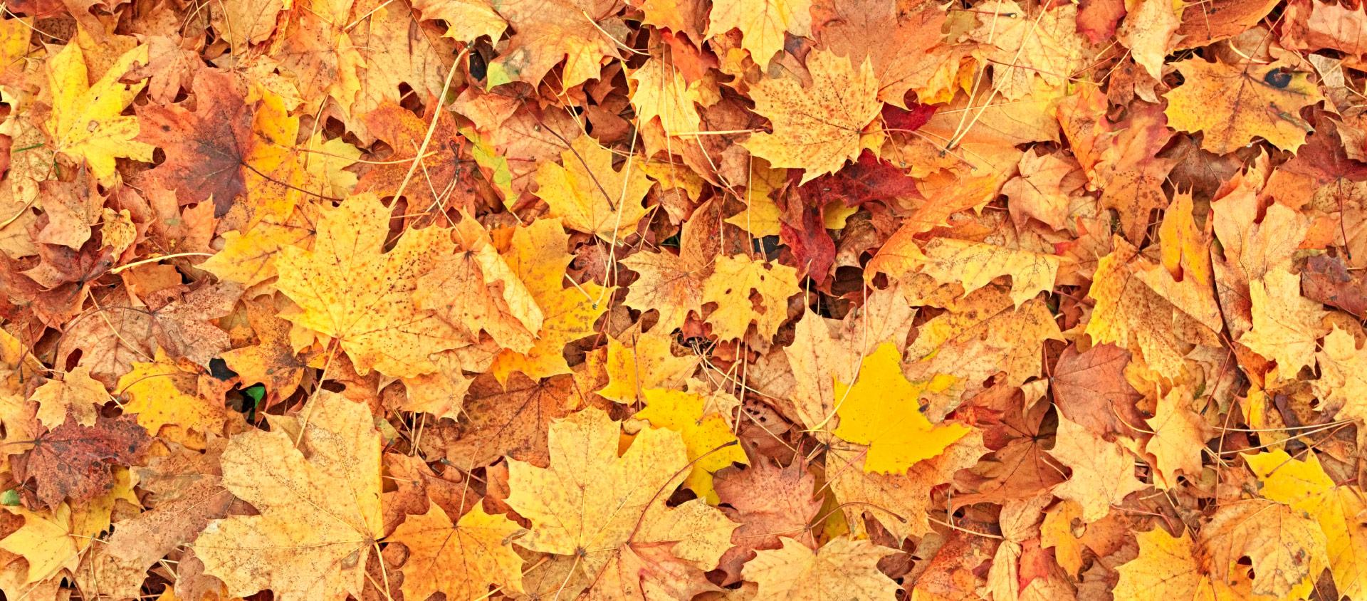 Outono: mudança de clima requer cuidados